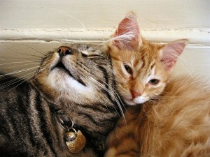 cats cudding